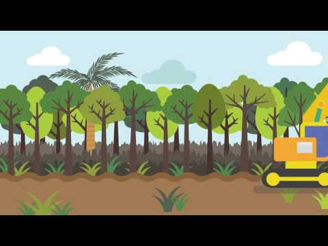 Embedded thumbnail for What is Peatland (Animated Video for Children )